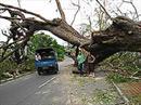 Uralte Bäume wurden von der Wucht der Orkanböen aus dem Boden gerissen und versperrten Strassen.