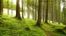 Der ökologische Umbau der Wirtschaft ist das Ziel der Initianten.