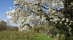 Frühling in Feldbach am Zürisee.