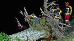 Heftige Orkanböen liessen Bäume umknicken.