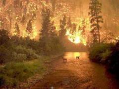 Waldbrände in Europa.